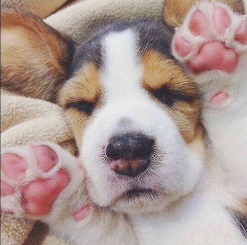 pink, puppy, paws and sleepy