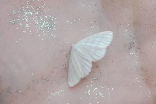 pale, sparks, palm and butterfly