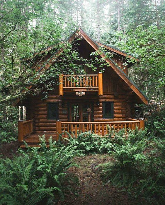 home, forest, house and cabin