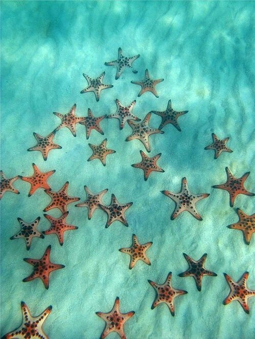 estrellas de mar, mar and naturaleza
