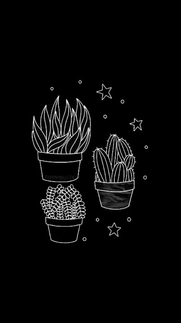 cactus, cactises, plants and white