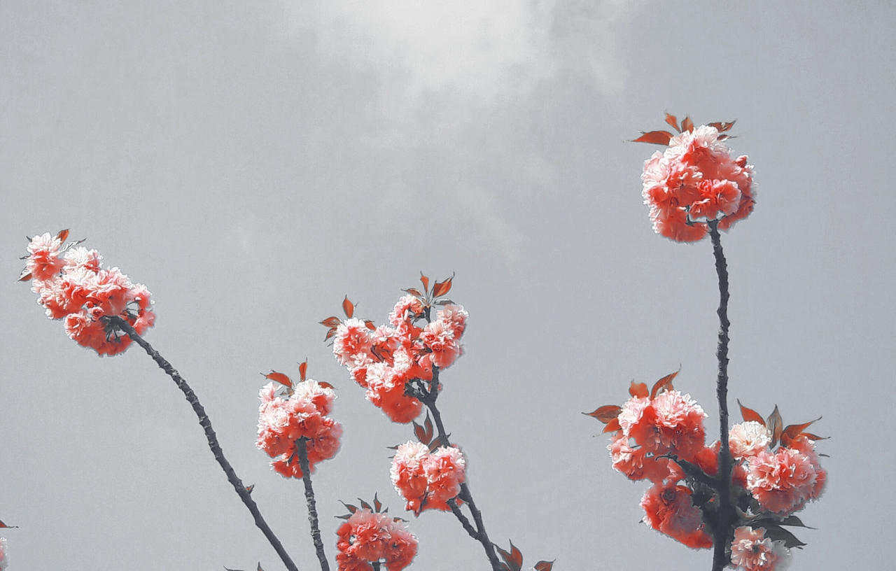 flower, aesthetic, sky and grey and pink aesthetic