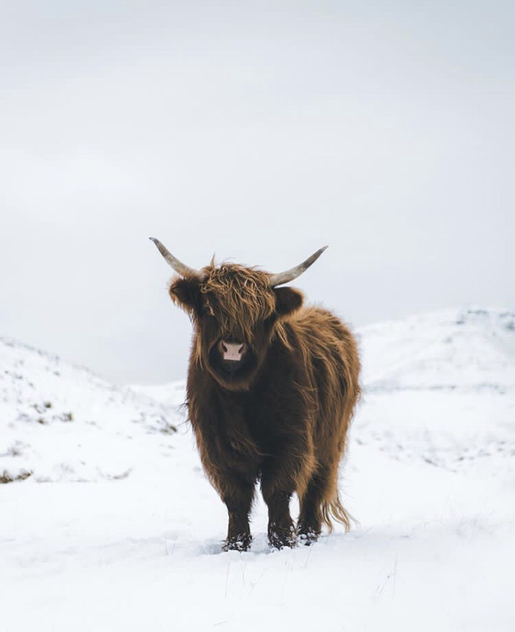 christmas, freezing and buffalo