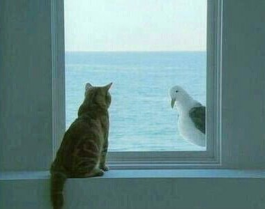 cat, back and gull