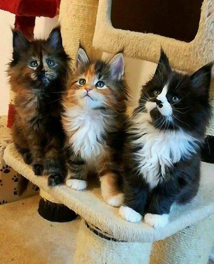 meow, kittens, cat and pets