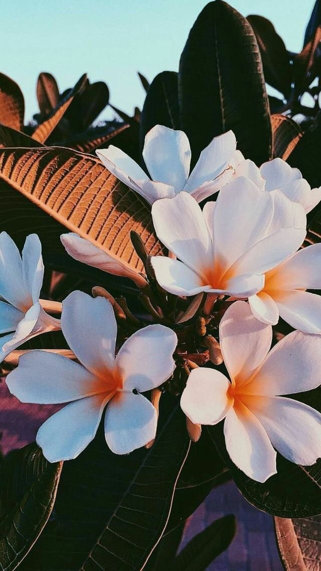 indie, flowers, soft and pale