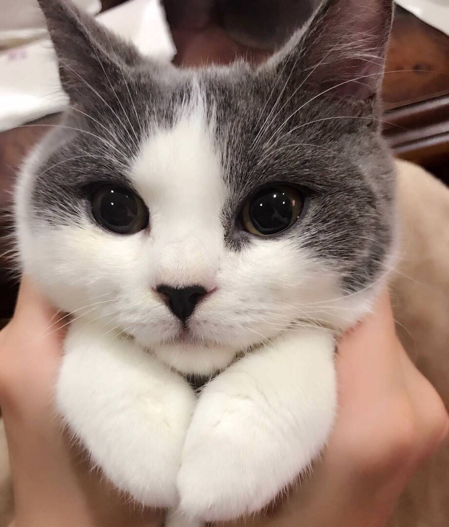 cute, life, cats and eyes