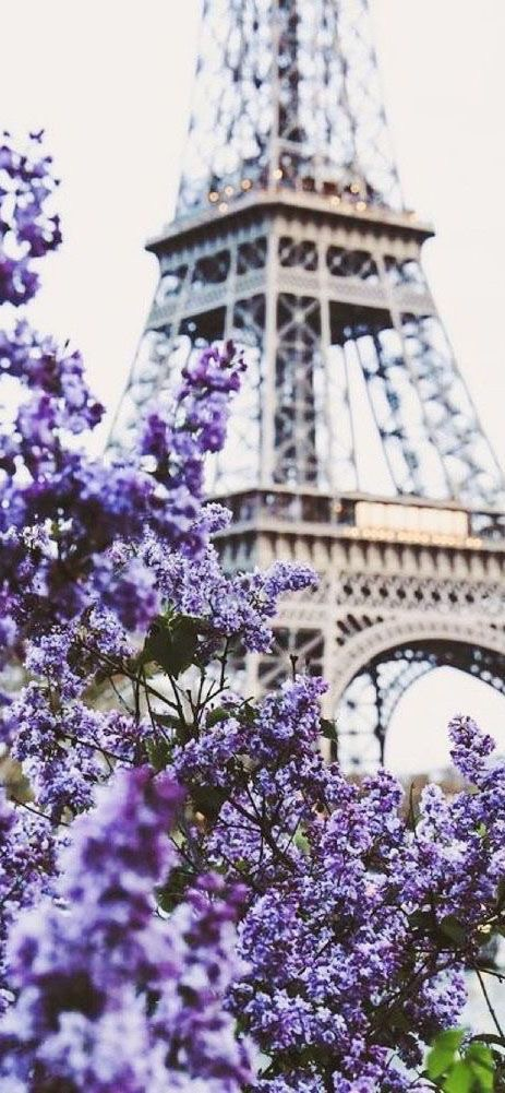Iphone X Wallpaper Iphone X Paris And Flowers Image 6738960 On Favim Com