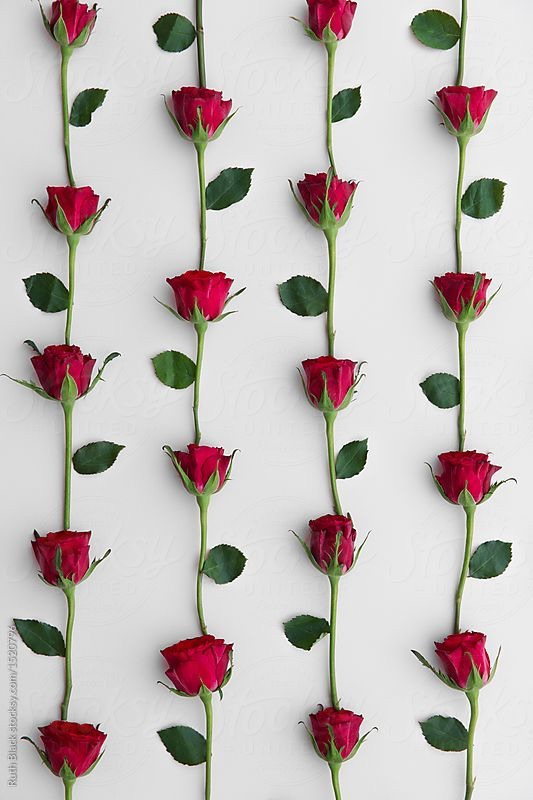 Flower Backrounds Aesthetic Wallpaper Red Roses And