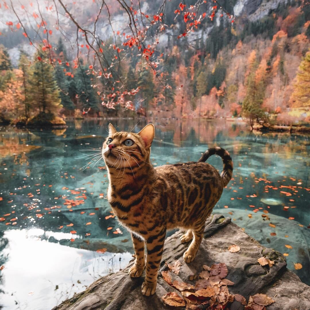 animals, baby, meow and beautiful