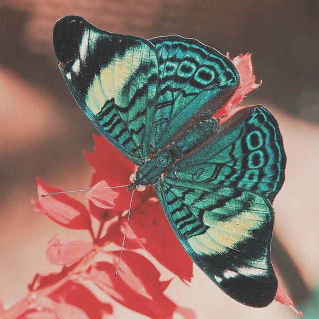 butterflies, nature, grow and pics