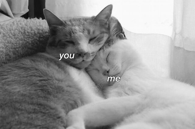 cats, forever, cutecapul and youandme