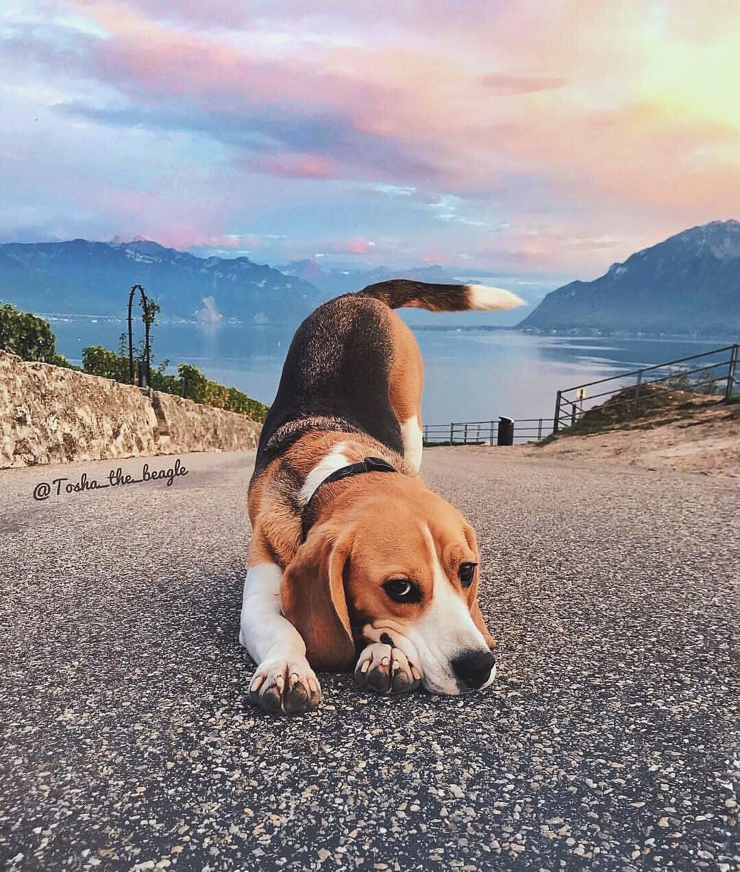 hipster, beagle, photography and aesthetic