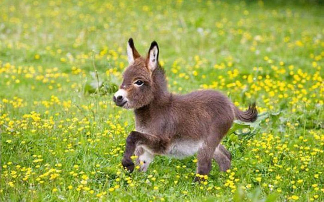 little, baby, puppies and donkey