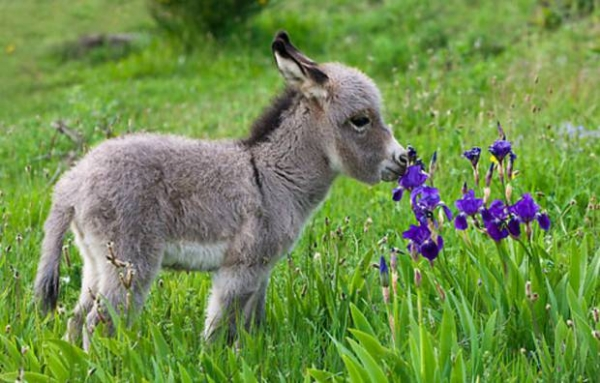 puppies, animals, donkey and grass