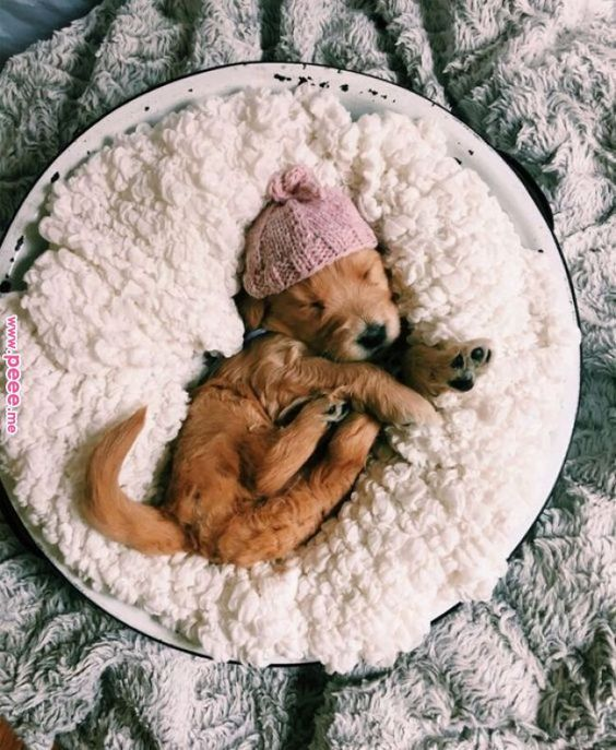 animals, lovely and puppy
