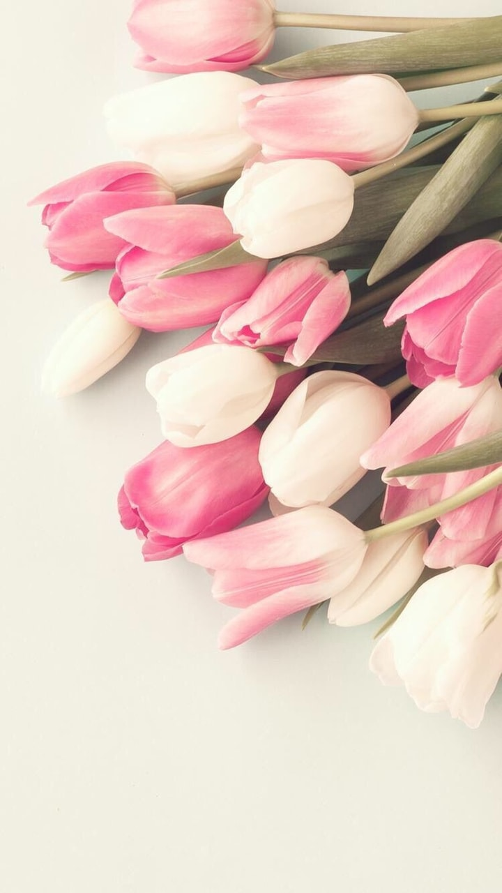 cute, white tulips, tulip and background