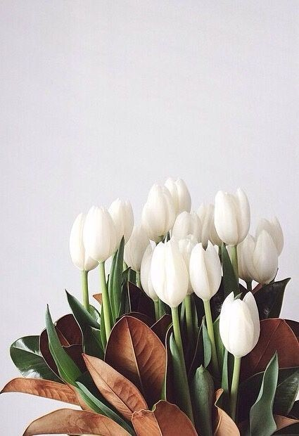 spring flowers, nature, spring and white flowers