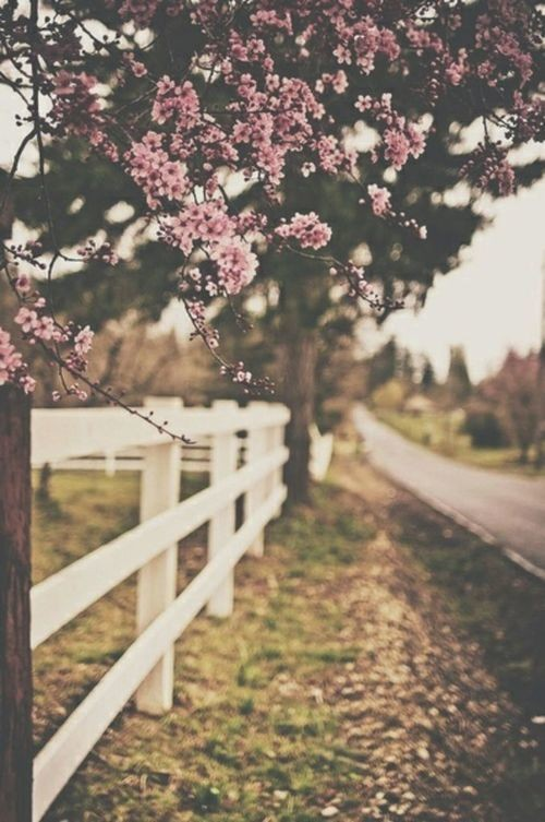 nature, flower, pink flower and wallpaper