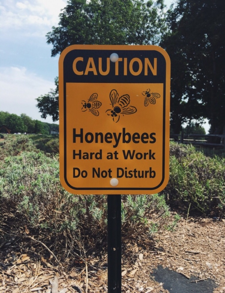bees, caution sign, vsco and save the bees
