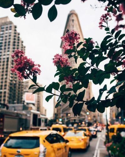 building, architecture, flowers and taxi