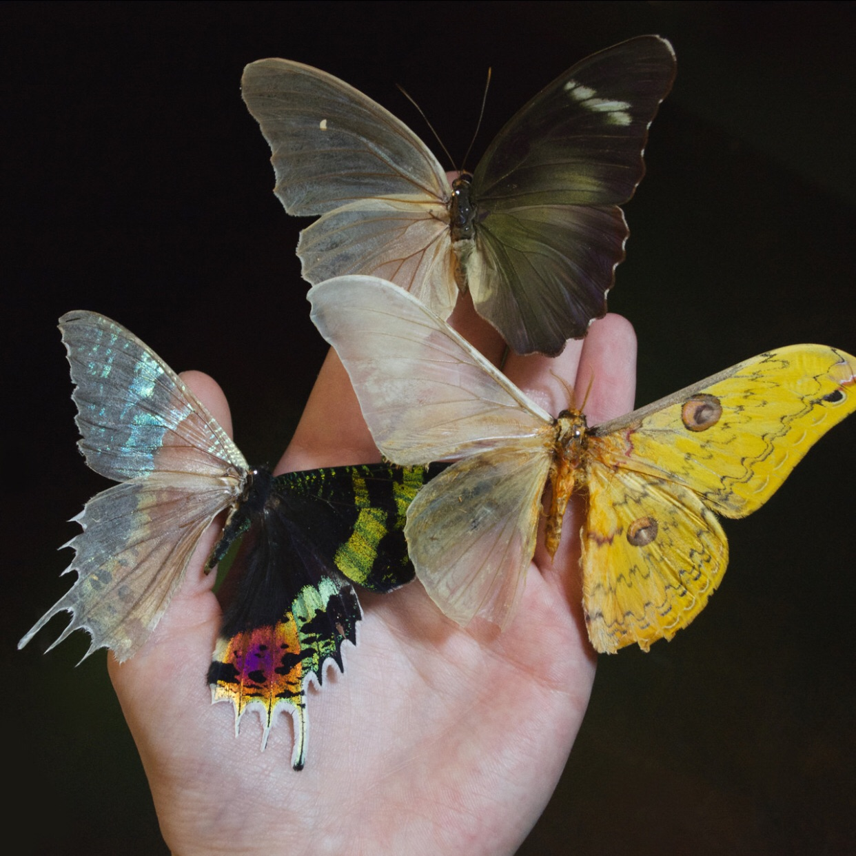 butterflies, colors, nature and pale