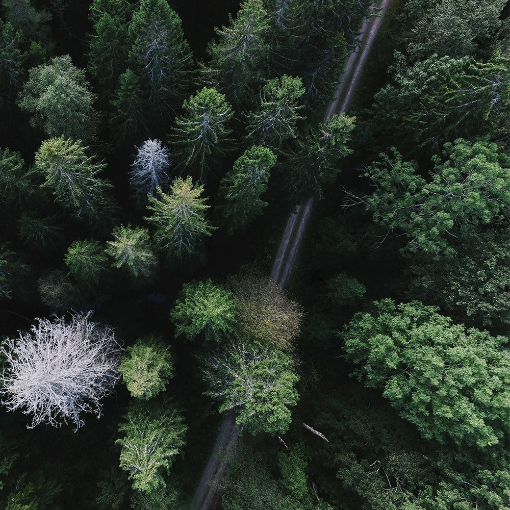 background, voyage, green and forest