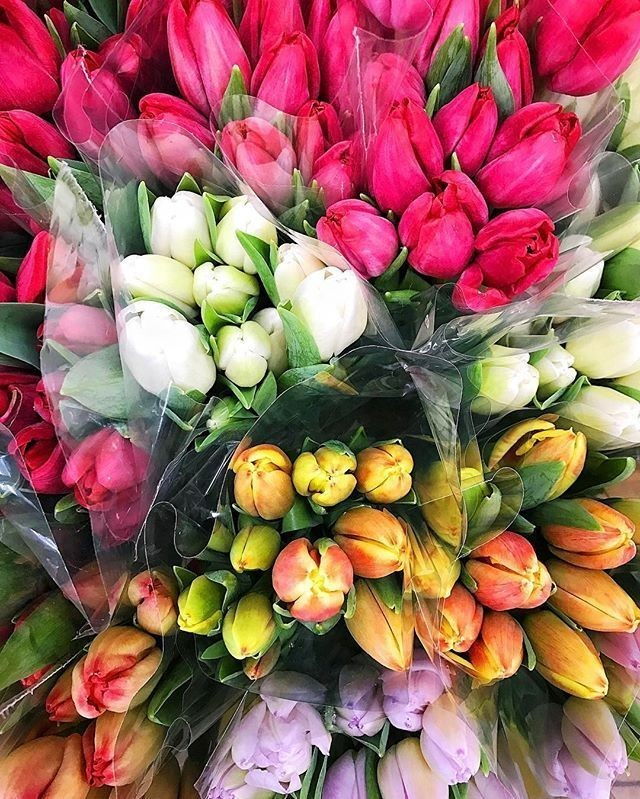 flowers, tulip, tulips and background