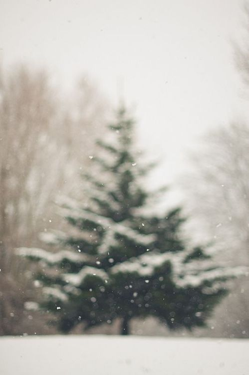 winter, snow, forest and january