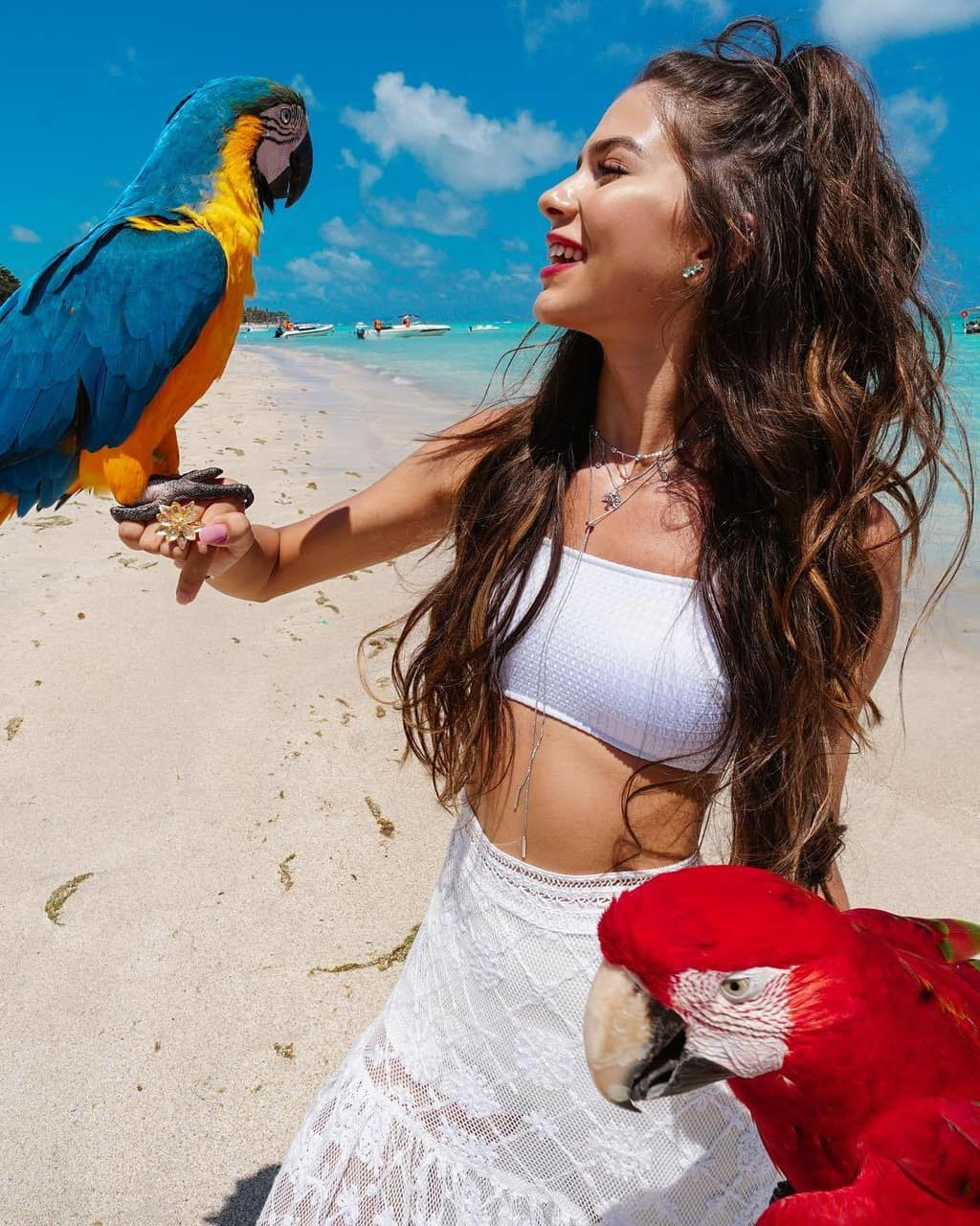 animales, tropical, animais and travel