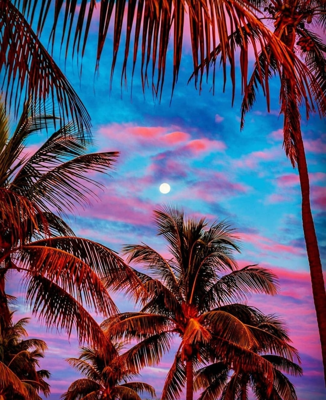 tropical, sky and summer