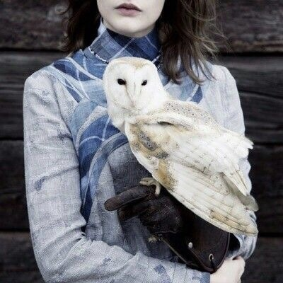 harry potter, owl and blue