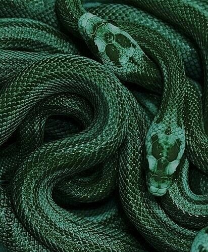 green snakes, dark, green and dark green
