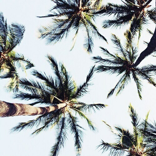 trees, palms trees, beach life and world view