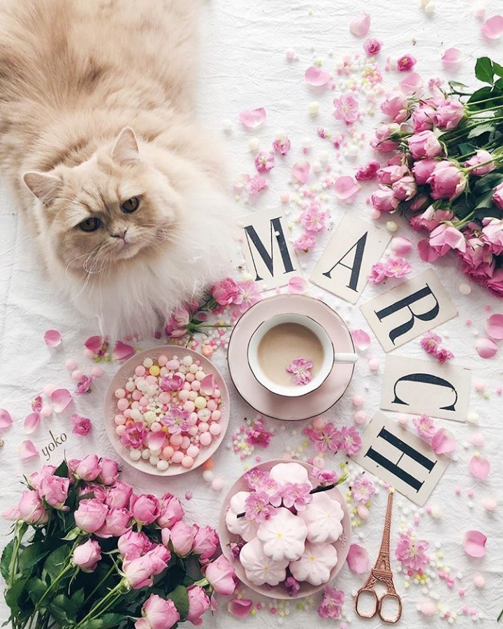cat, coffee, beauty and cats