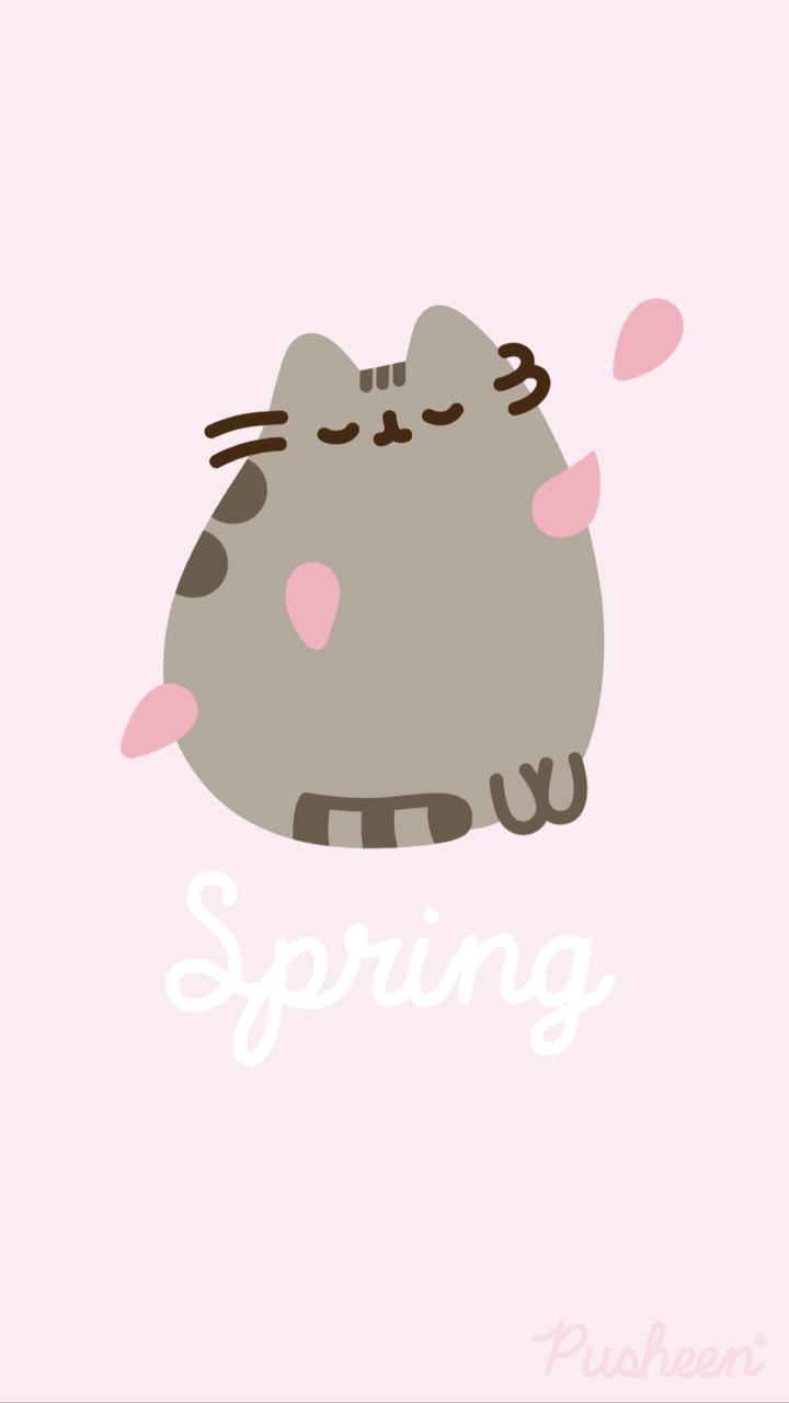cute, pink, spring and cat