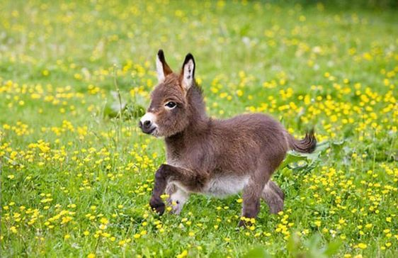 adorable, baby, cute and animals