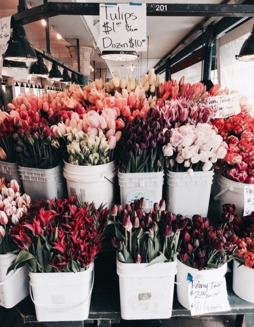 tulips, summer, flowers and spring is here