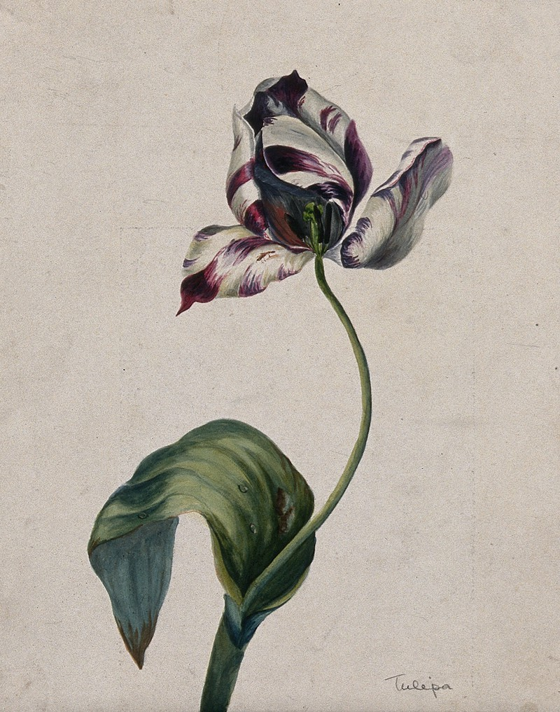 plants, floral art, botanical art and botanical illustration