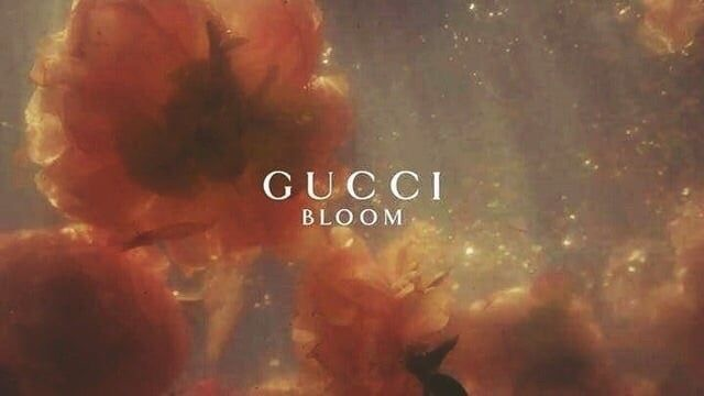 gucci parfume, luxury brands, bloom and gucci