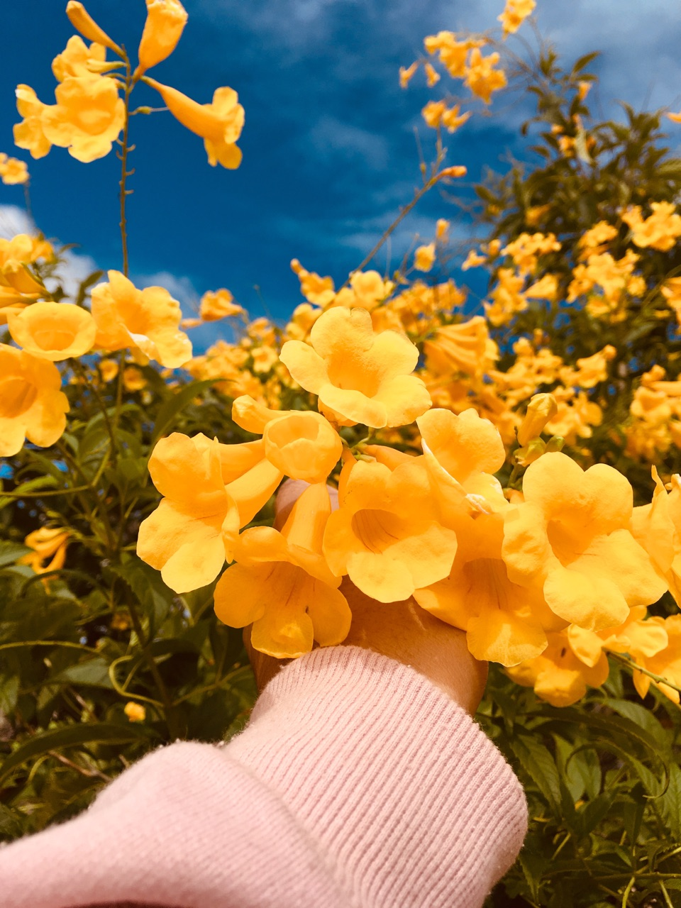 cu, girls, yellow and flowes