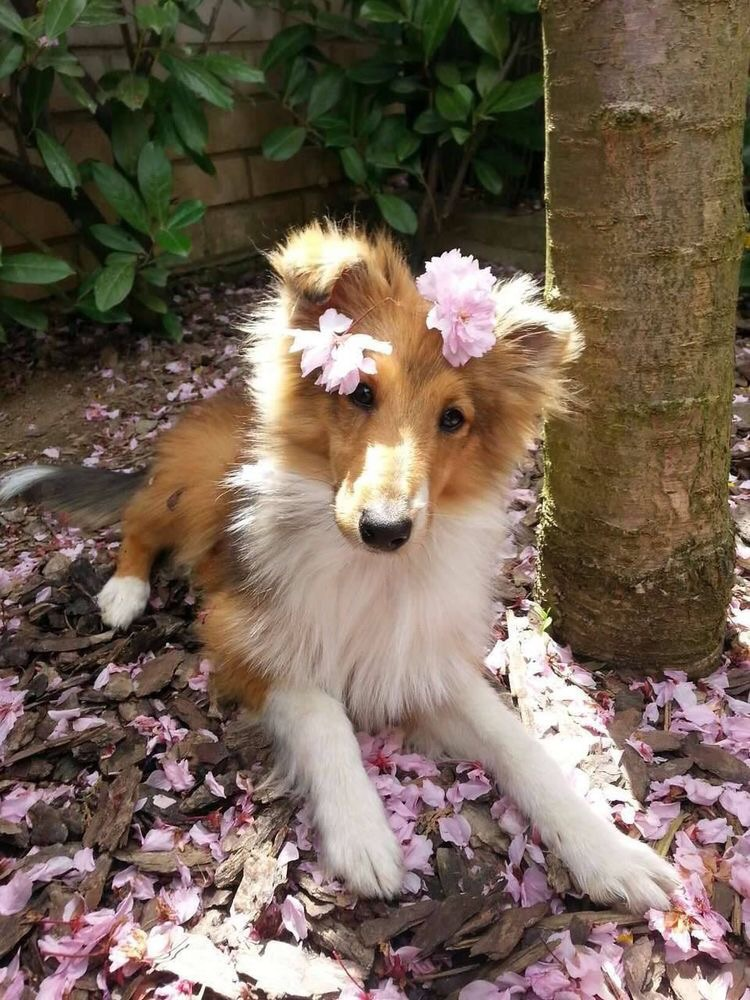 animals, beauty, puppy and animal