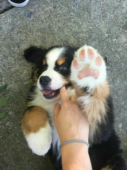 dog, adorable dogs, adorable and cute dogs