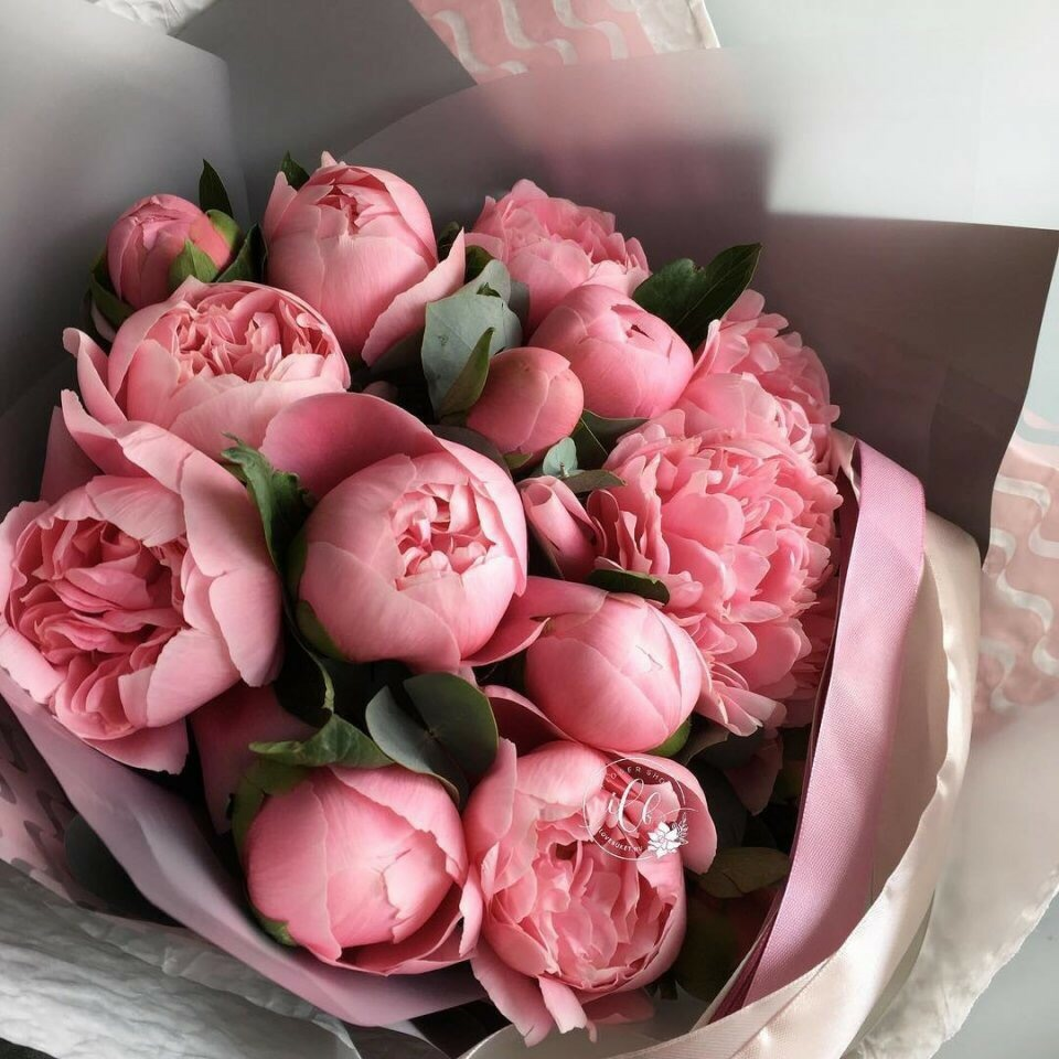 girly things, p, roses pink and roses