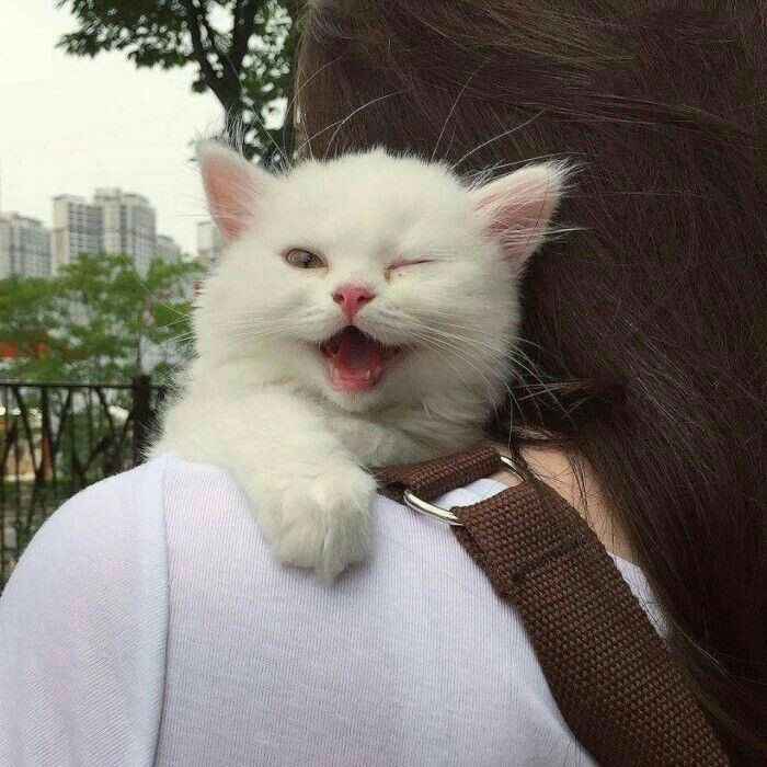 funny cats, kitty, cat and funny animals