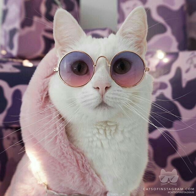 cat, pets, adorable animals and fashion