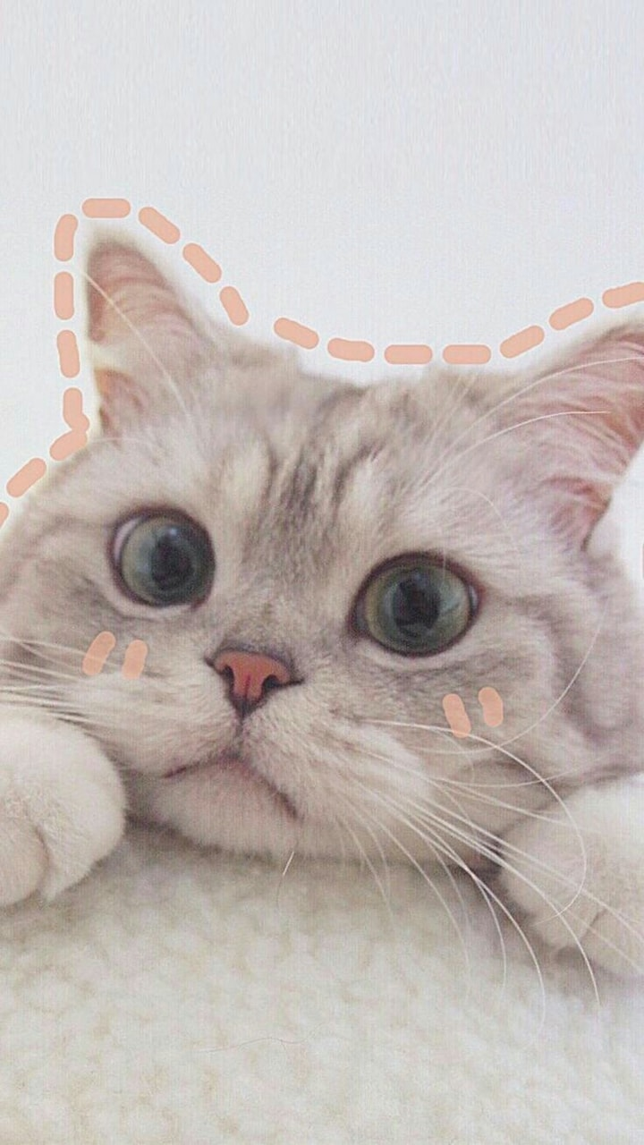 pets, cute cats, adorable cats and adorable animals