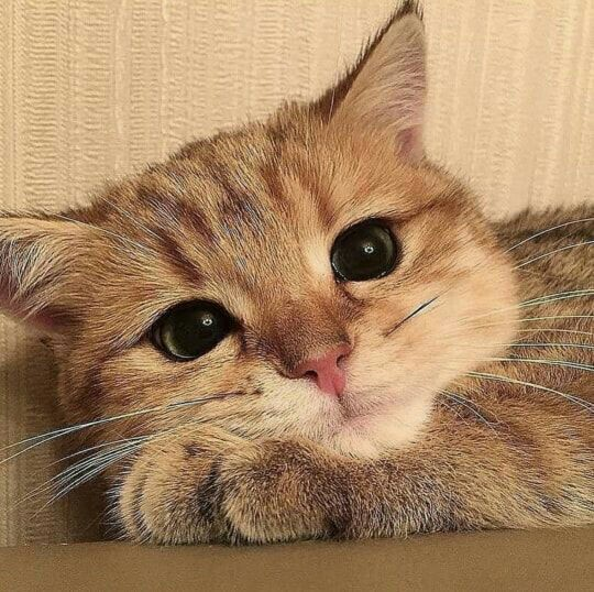 kitty, animals, adorable animals and pet