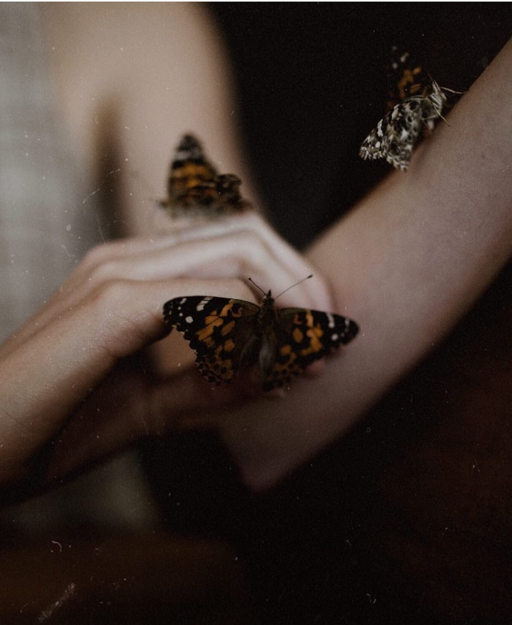 vintage, butterflies, naturephotography and photography