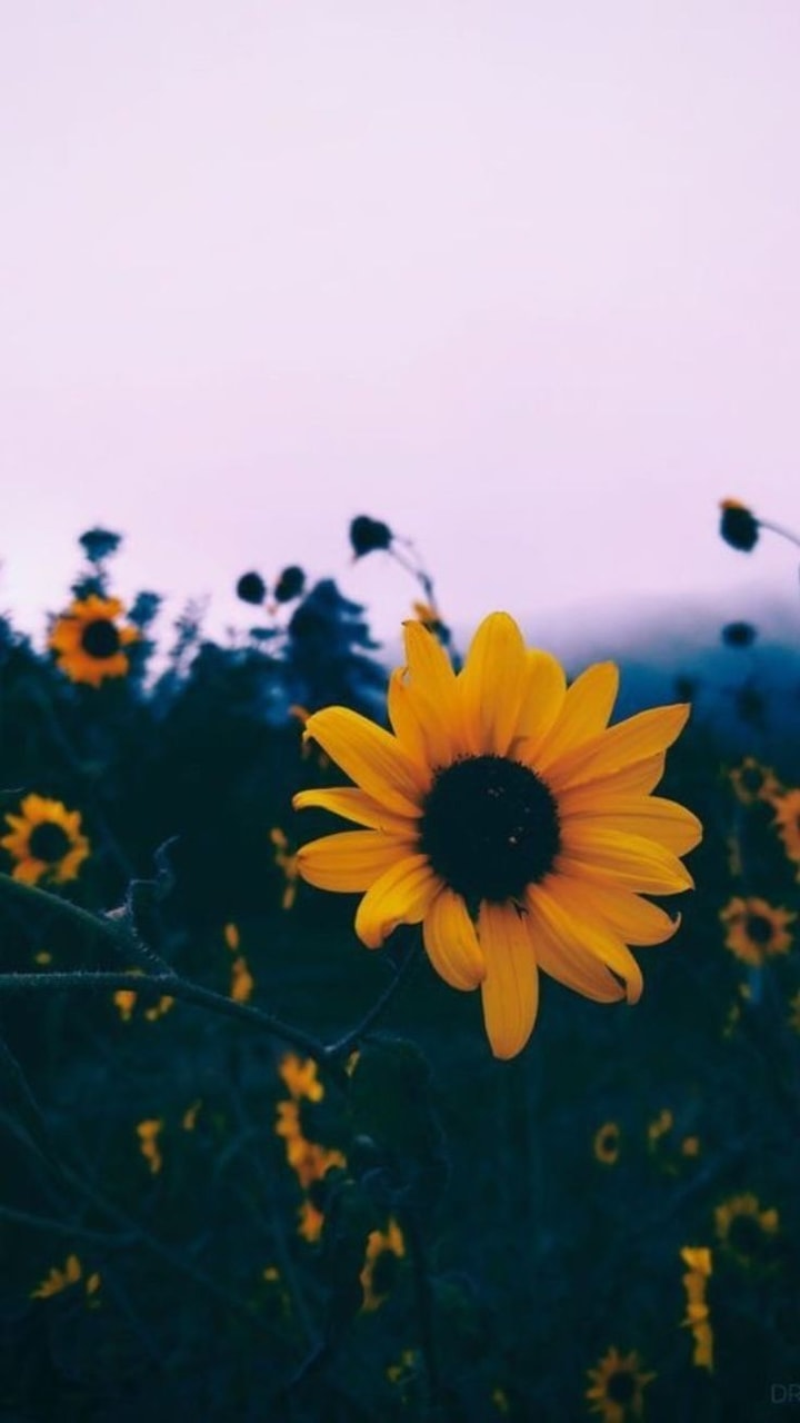 si, sgs, photography and yellow flowers